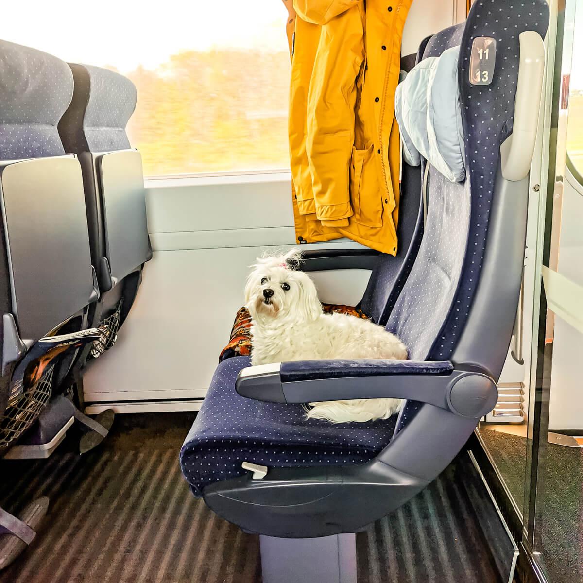 Hund im Zug