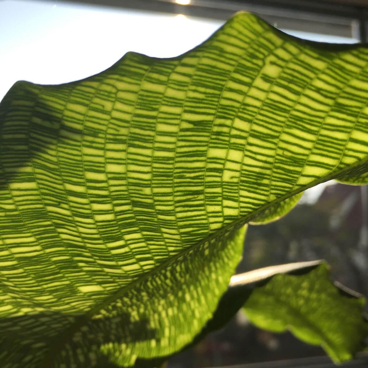Struktur auf einem Blatt einer Pflanze