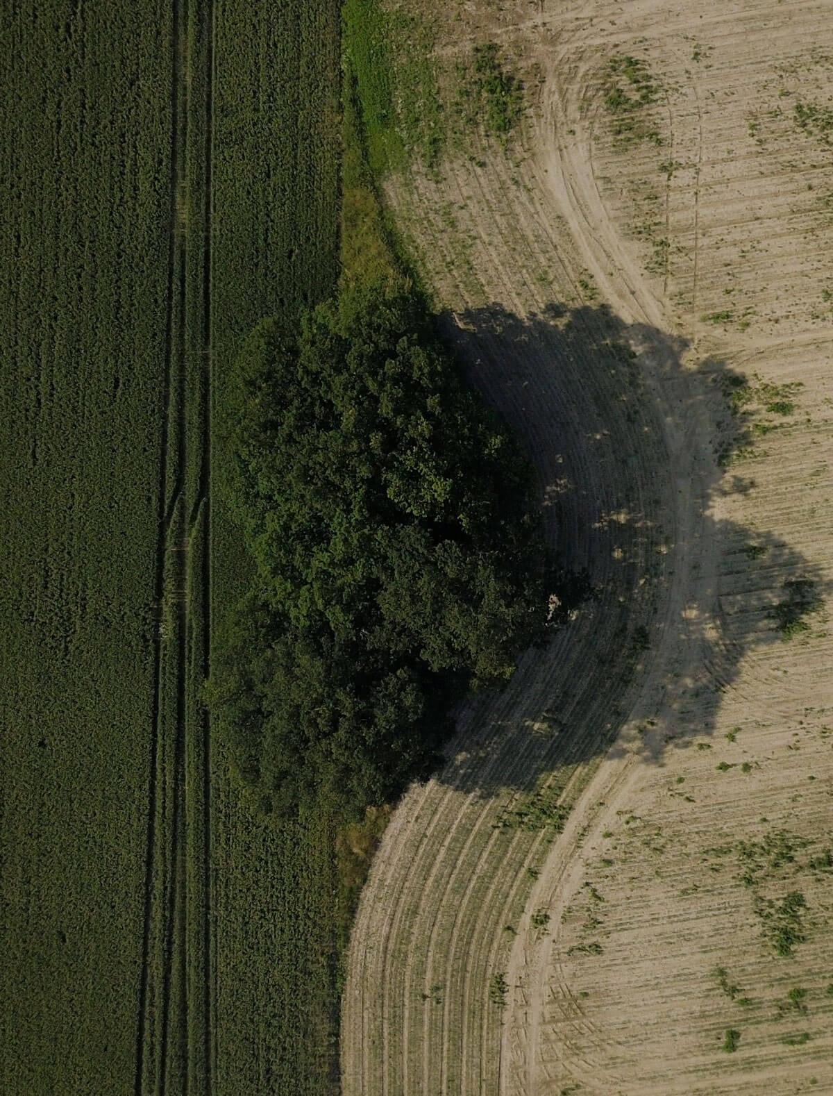 Luftbild Felder und Böschung